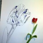 Entstehung einer Tulpe auf 80 x 60 cm (c) Zeichnung von Susanne Haun