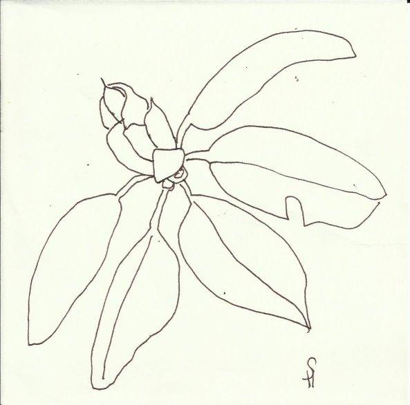 Rhododendren (c) Zeichnung von Susanne Haun