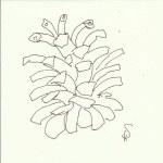 Zapfen Version 1 (c) Zeichnung von Susanne Haun