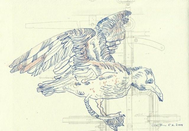 Fliegende Möwe auf Lilienthals Flugapparat - 30 x 20 cm - Tusche auf Bütten (c) Zeichnung von Susanne Haun