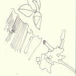 Oliven (c) Zeichnung von Susanne Haun