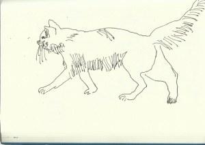 Die Tierwelt in Fes (c) Zeichnung von Susanne Haun