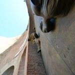 Pforte Santa Maria degli Angeli (c) Foto von M.Fanke