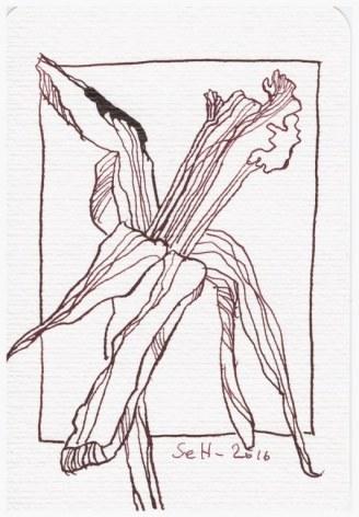 Narzisse - 15 x 10 cm (c) Zeichnung von Susanne Haun