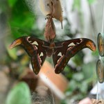 Schmetterling im Regenwald (c) Foto von M.Fanke