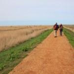 Auf dem Weg durch die Cley Marshes (c) Foto von Susanne Haun