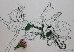 Geranie und Modell (c) Foto u. Zeichnung von Susanne Haun
