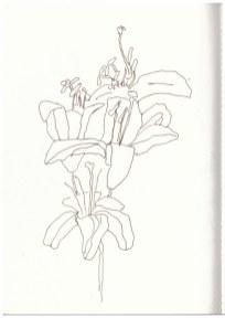 1 Blumen von Mamas Grab (c) Zeichnung von Susanne Haun -