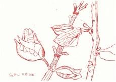 Blumen aus dem Botanischen Garten Göttingen - 17 x 24 cm - Tusche auf Aquarellkarton (c) Zeichnung von Susanne Haun