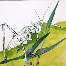 4 Grashüpfer - 30 x 40 cm – Tusche auf Bütten (c) Zeichnung – Collage von Susanne Haun