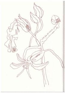 Auf meinem Balkon (c) Zeichnung von Susanne Haun