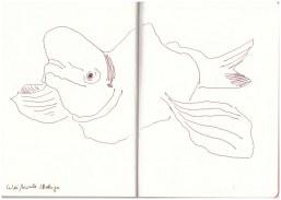 Weisswahl - Beluga (c) Zeichnung von Susanne Haun