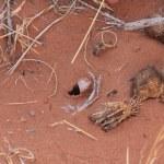 In diesem Loch haust eine Spinne (c) Foto von Susanne Haun
