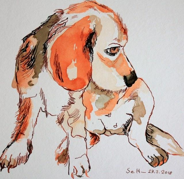 Allzeit bereit - der Beagle - Version 2 -21 x 21 cm - Tusche auf Hahnemühle quattro (c) Zeichnung von Susanne Haun