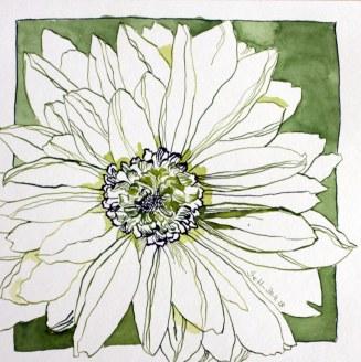Gerbera - 25 x 25 cm - Tusche auf Hahnemuehle Aquarellkarton (c) Zeichnung von Susanne Haun