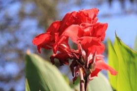 Florales in Swakopmund (c) Foto von Susanne Haun
