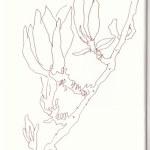 Sonntagsspaziergang - Magnolie (c) Zeichnung von Susanne Haun