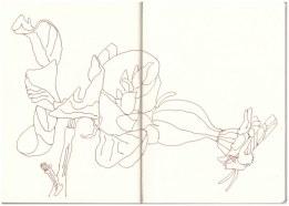 Namibia - Florales (c) Zeichnung von Susanne Haun