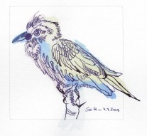 1 Farbenfroher Vogel, Version 2, 12 x 12 cm, Tusche auf Hahnemühle Aquarellkarton, Zeichnung von Susanne Haun (c) VG Bild-Kunst, Bonn 2019