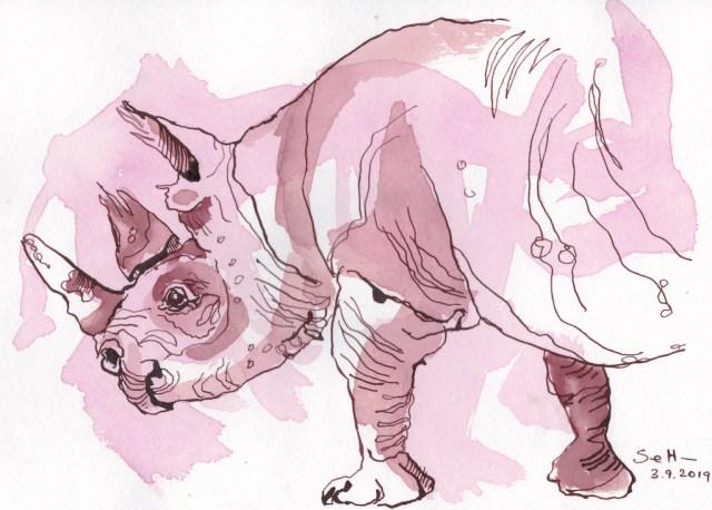 Nashorn, Zeichnung von Susanne Haun, Tusche auf Hahnemuehle Aquarellkarton, 17 x 24 cm (c) VG Bild-Kunst, Bonn 2019