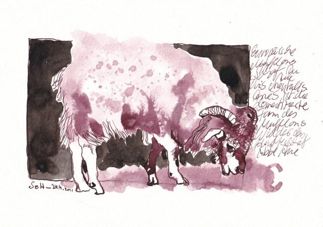 5 - Susanne Haun, Europäische Mufflons sind flauschig zersaust, 24.4.2011, 17 x 24 cm, Tusche auf Hahnemühle Aquarellkarton