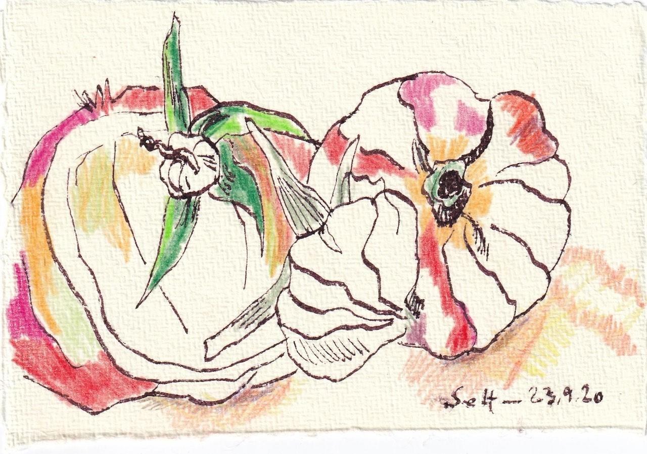 Tagebucheintrag 23.09.2020, Unsere Tomaten, 15 x 10 cm, Tinte und Buntstift auf Silberburg Büttenpapier, Zeichnung von Susanne Haun (c) VG Bild-Kunst, Bonn 2020