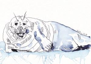 Grey Seals, Kegelrobben, Liegender Akt, Tusche auf Aquarellkarton, 17 x 24 cm, Zeichnung von Susanne Haun (c) VG Bild-Kunst, Bonn 2020