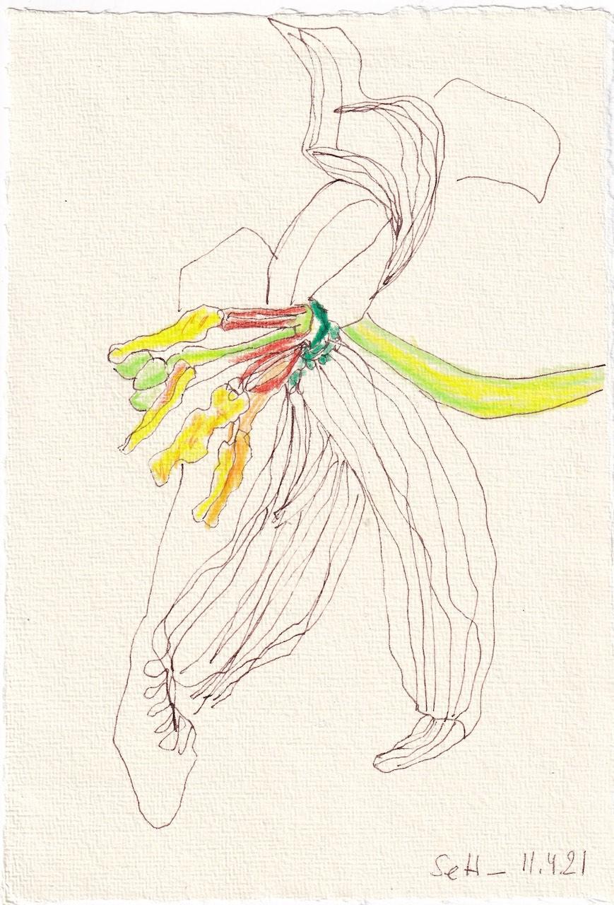 Tagebucheintrag 11.04.2021, Vanitas Tulpen, 20 x 15 cm, Tinte und Buntstift auf Silberburg Büttenpapier, Zeichnung von Susanne Haun (c) VG Bild-Kunst, Bonn 2021
