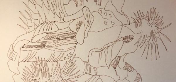 Mohn Knospe, Aus dem Skizzenbuch von Susanne Haun (c) VG Bild-Kunst, Bonn 2021