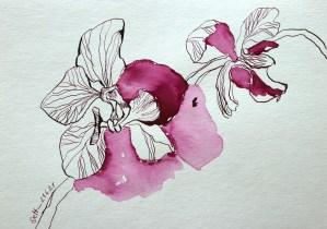 Rosies Orchidee, Tusche auf Aquarellkarton, 17 x 24 cm, Zeichnung von Susanne Haun (c) VG Bild-Kunst, Bonn 2021