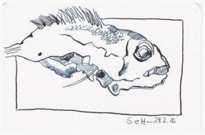 Fisch Meerbrasse Rotbrasse - Tusche auf Bütten - 10 x 15 cm (c) Zeichnung von Susanne Haun