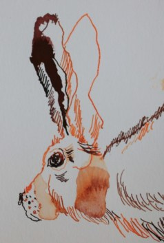 Sehgewohnheiten der Kleinsten – Der Feldhase - Ausschnitt (c) Collage von Susanne Haun