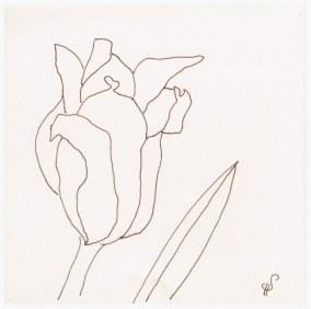 Tulpenvariationen (c) Zeichnung von Susanne Haun