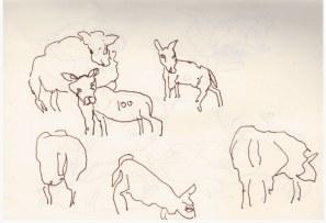 Skizzenbuch Norfolk Schafe am Wegesrand (c) Zeichnung von Susanne Haun