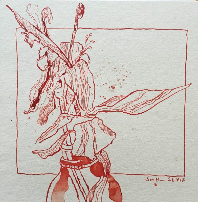 Verblhte Lilie  Zeichnung von Susanne Haun  Susanne Haun