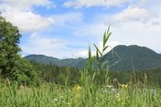 Der Hintersee im Berchtesgadener Land (c) Foto von Susanne Haun