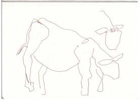 Kühe in der Mark Brandenburg, Neuroddahn (c) Zeichnung von Susanne Haun