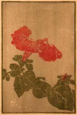 Hopkins   Petunia