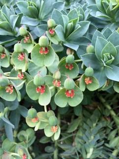 Green flower with cobweb