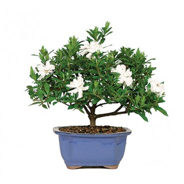 The Soothing Company: Bonsai and Much More. The Soothing Company offers thousands of soothing products for your home and garden. Everything from water features to bonsai trees to a wall aquarium.