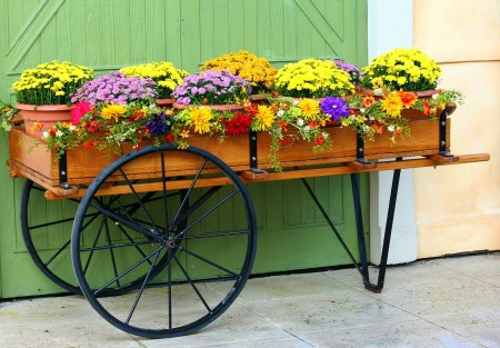 Container Gardens: Top Tips for a Stunning Display