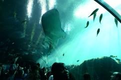 The Atlanta Aquarium fish tunnel