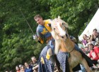 Palomino horse and knight during a joust at a Renaissance Festival