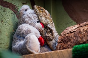 Reptile clutching a stuffed teddy bear for comfort