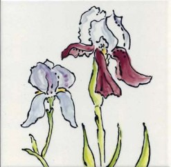 Bearded Iris, single product, by Susan Sternau