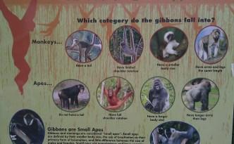 monkeyorape