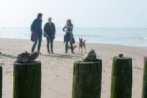 Coachweekend Door hondenogen bekeken