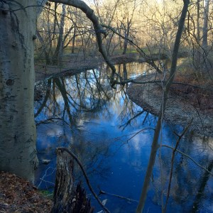 Wissahickon Blue by Susan Windle