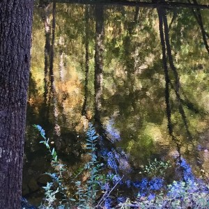 Autumn Reflections, Wissahickon Creek by Susan Windle