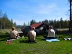 nach dem Training in Falun - im Hintergrund die Skichance